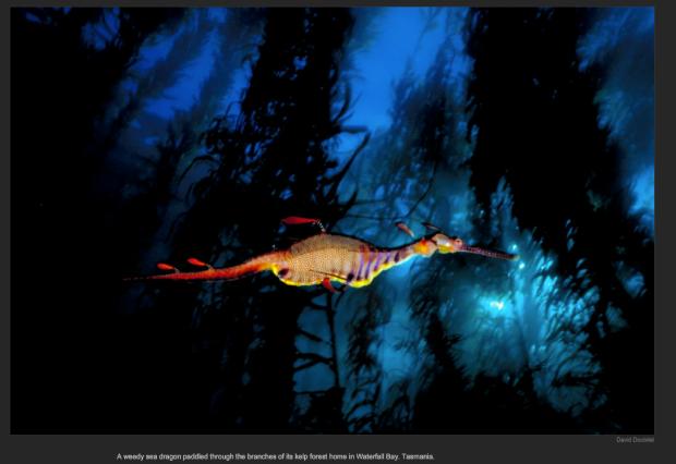 Captura de pantalla 2013-01-22 a las 9.32.17