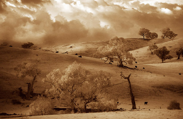 Mansfield area - Victoria, Australia - infrared photograph, late afternoon