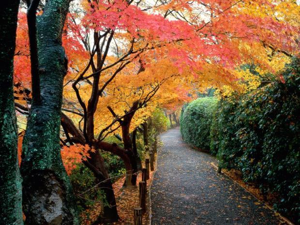 AutumnColorsKyotoJapan