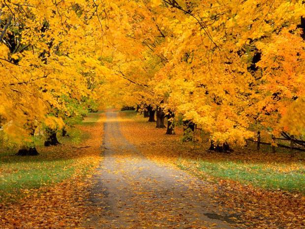 AutumnCoveredRoad