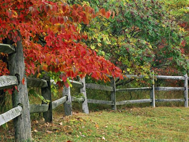 AutumnFenceBrownCountyStateParkIndi