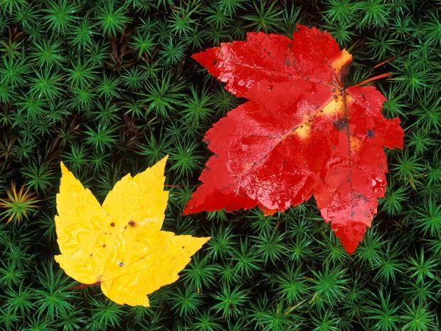 AutumnLeavesonForestFloorVermont
