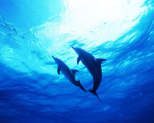 delfines-1280-x-1024
