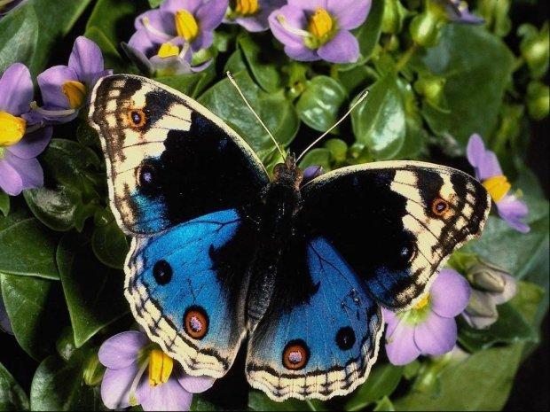 mariposa-11