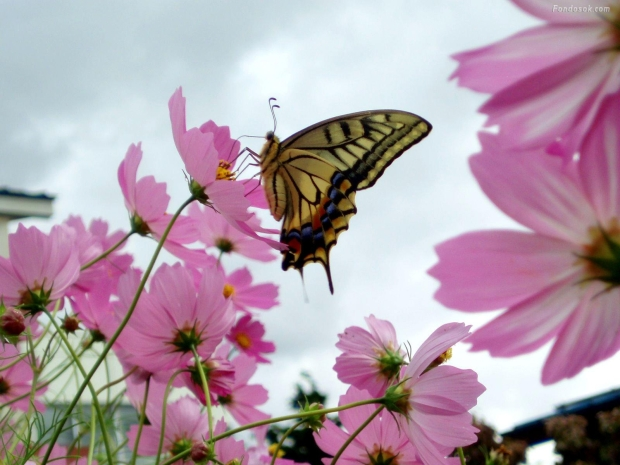 mariposa-653