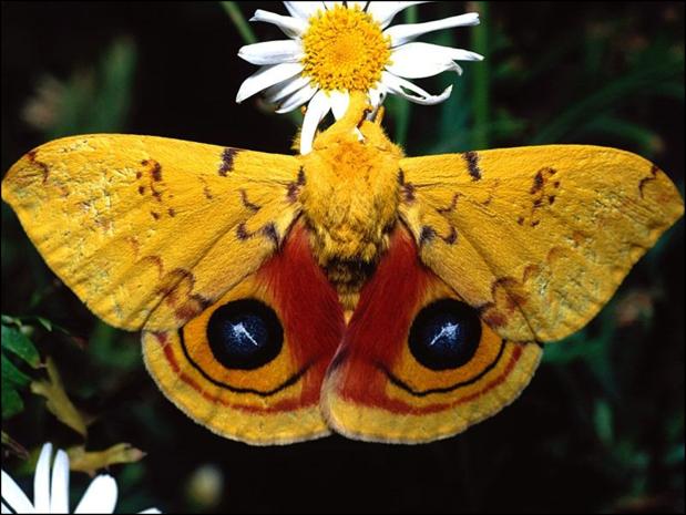mariposas31