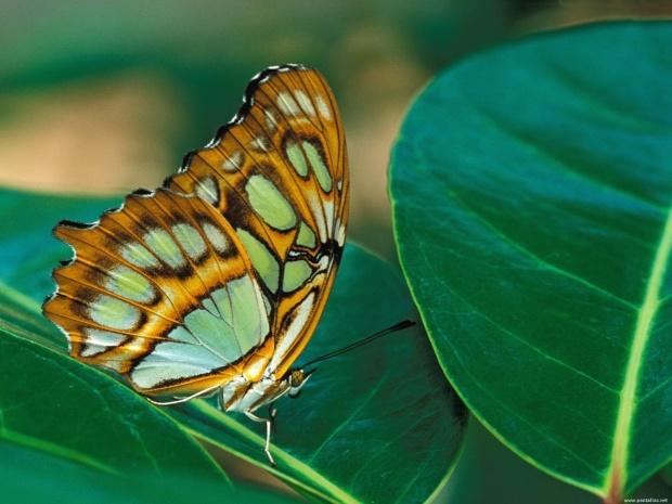 mariposas_0015-1600x1200
