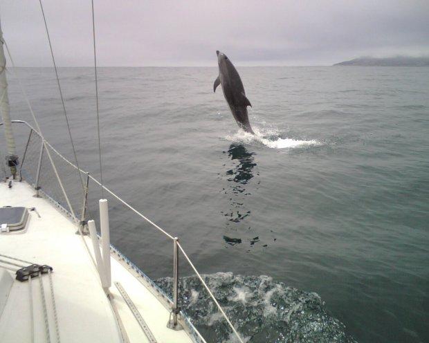 Marval Quintero 2008 delfin salto