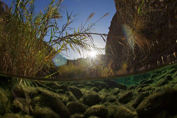 most-important-freshwater-uae_65496_600x450
