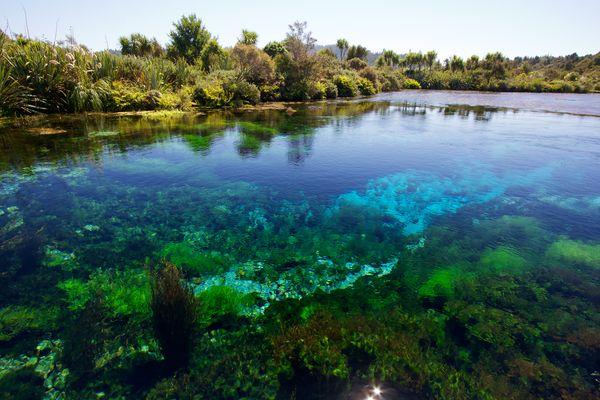 most-important-freshwater-waikoropupu_65499_600x450