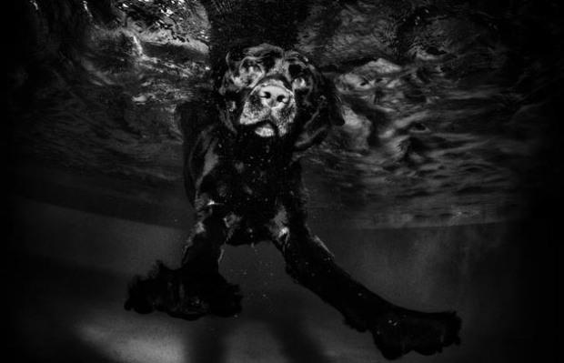 Perros-bajo-el-agua-10