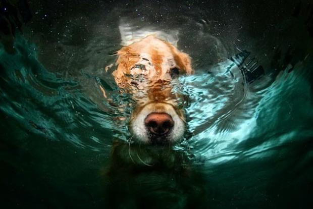 Perros-bajo-el-agua-11