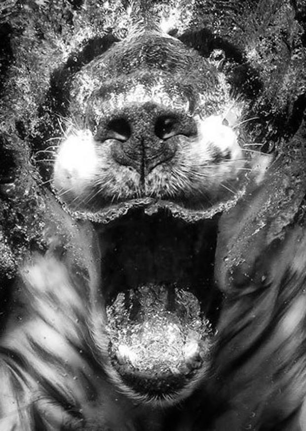 Perros-bajo-el-agua-12