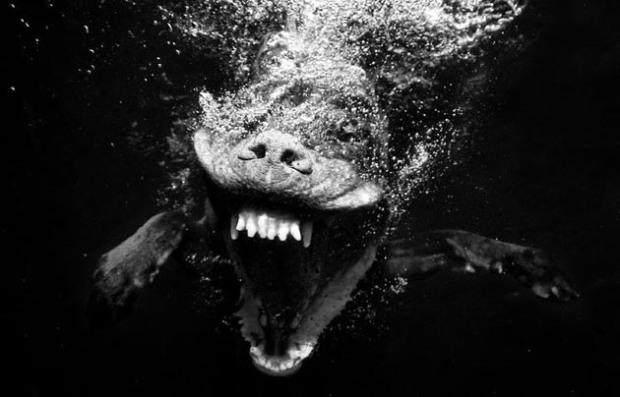 Perros-bajo-el-agua-15