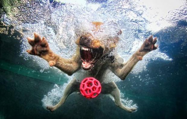 Perros-bajo-el-agua-2