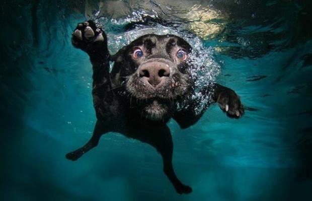 Perros-bajo-el-agua-6