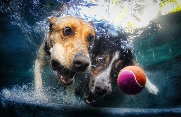 Perros-bajo-el-agua-8