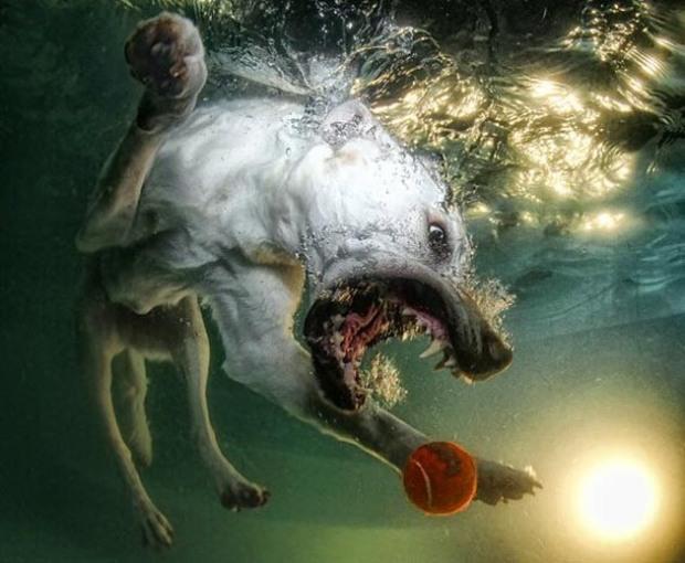 Perros-bajo-el-agua-9