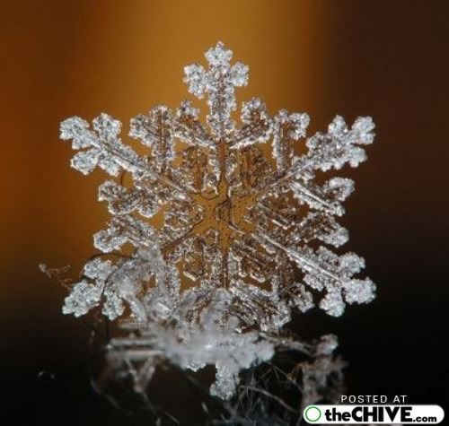 snowflake-microscope-beautiful-10