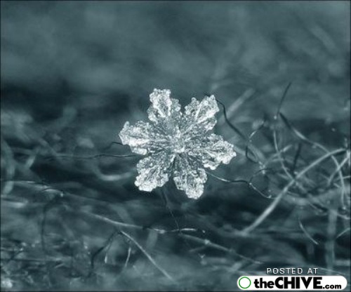 snowflake-microscope-beautiful-11
