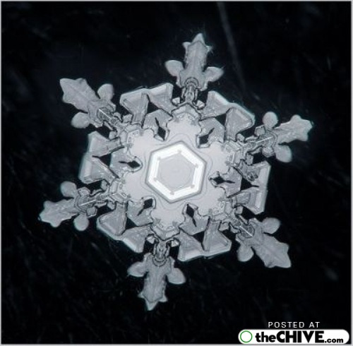 snowflake-microscope-beautiful-13