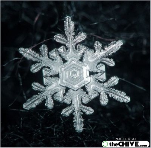 snowflake-microscope-beautiful-14