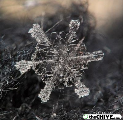 snowflake-microscope-beautiful-15