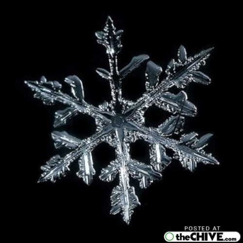 snowflake-microscope-beautiful-17