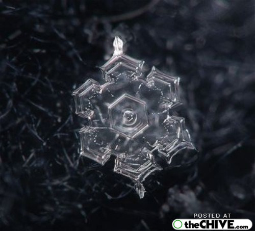 snowflake-microscope-beautiful-18