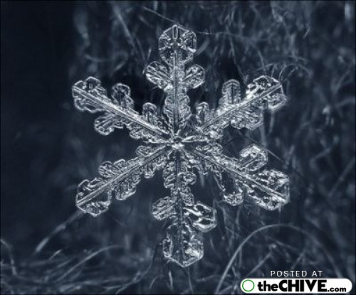 snowflake-microscope-beautiful-21
