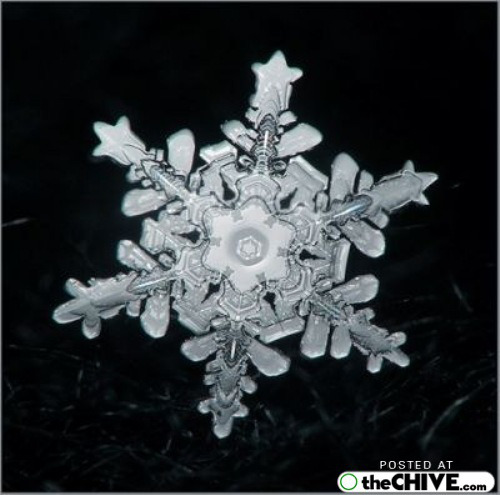 snowflake-microscope-beautiful-7