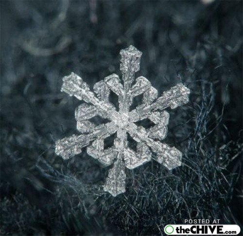 snowflake-microscope-beautiful-8