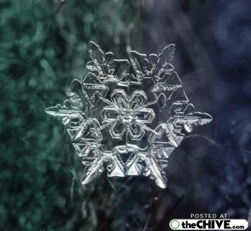 snowflake-microscope-beautiful-9