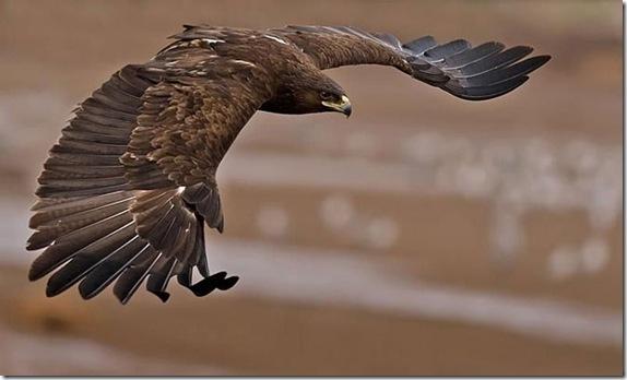 birdsinflight_17_funnypagenet.com_