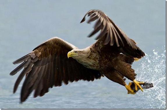 birdsinflight_1_funnypagenet.com_