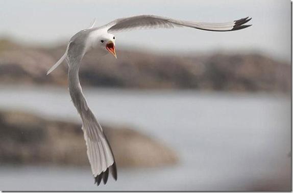 birdsinflight_3_funnypagenet.com_