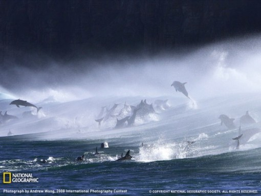 bottlenose-dolphins-at-waterfall-bluff
