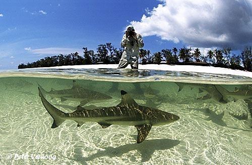 espectaculares-fotos-sobre-y-bajo-el-agua_02_thumb