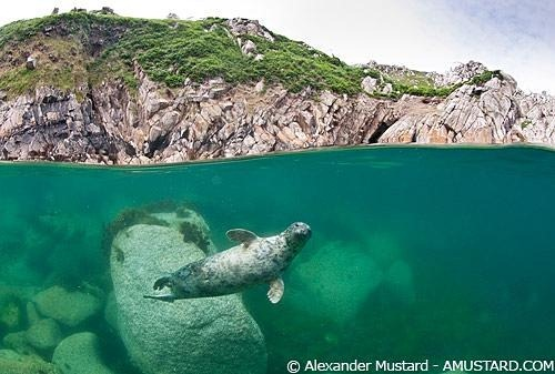 espectaculares-fotos-sobre-y-bajo-el-agua_03_thumb