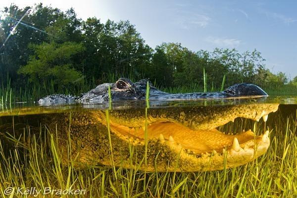 espectaculares-fotos-sobre-y-bajo-el-agua_04_thumb