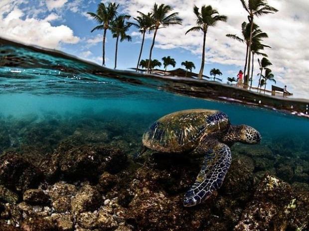espectaculares-fotos-sobre-y-bajo-el-agua_08_thumb