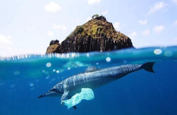 espectaculares-fotos-sobre-y-bajo-el-agua_10_thumb