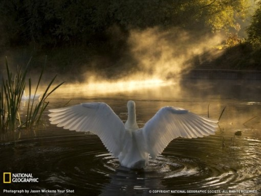 swan-on-the-river-avon