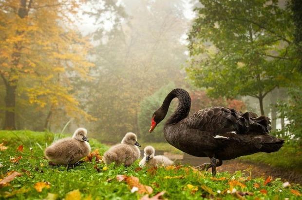 25-Most-Beautiful-Animals-Photography-StumbleUpon-111