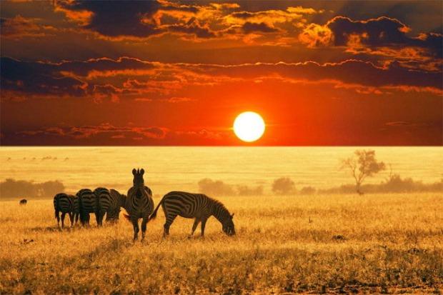 25-Most-Beautiful-Animals-Photography-StumbleUpon-151
