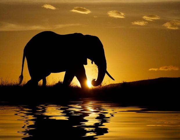 25-Most-Beautiful-Animals-Photography-StumbleUpon-202