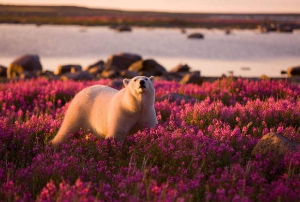 25-Most-Beautiful-Animals-Photography-StumbleUpon-221