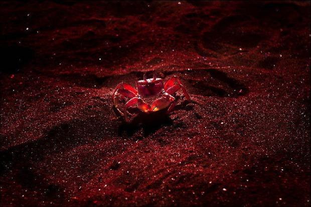 25-Most-Beautiful-Animals-Photography-StumbleUpon-42