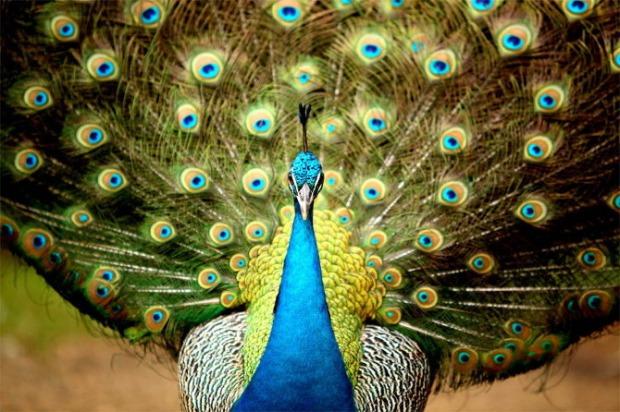 25-Most-Beautiful-Animals-Photography-StumbleUpon-51