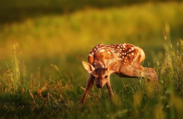 Beautiful-animals-photographu-stumbleupon-11